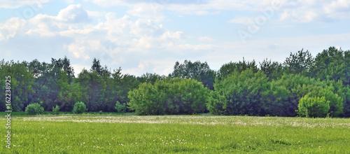 Obraz na płótnie Forest glade on the edge of the forest