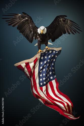Fényképezés Bald Eagle with American flag