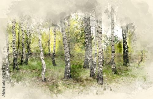 Birch Grove. Watercolor background