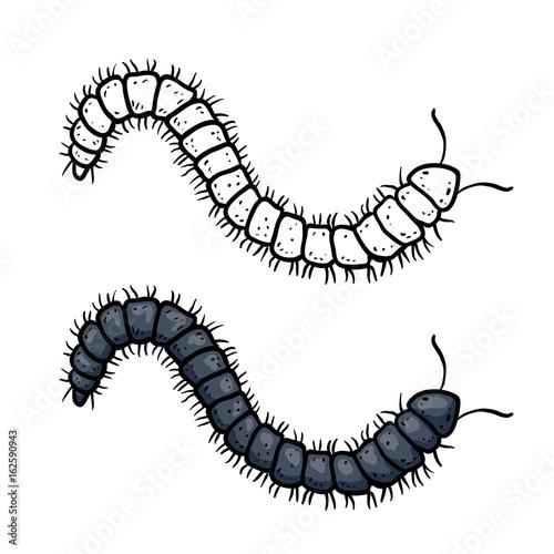 Centipede Sketch Tapéta, Fotótapéta
