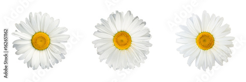 Isolated collage of chamomile flowers on white background