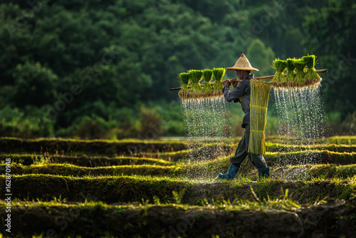Photo Farmers grow rice in the rainy season
