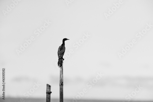 Black and white tones in minimalist photography