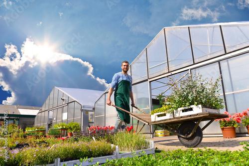 Obraz na plátne Gärtner arbeitet in einer Gärtnerei - im hintergrund Pflanzen und Gewächshäuser