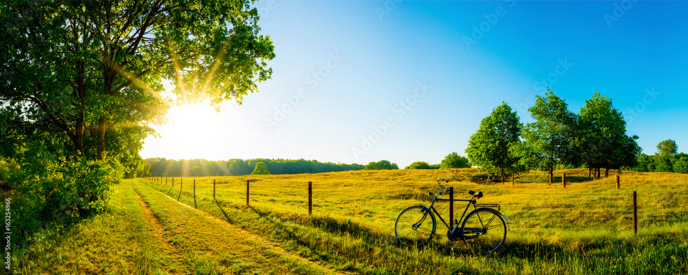 Krajobraz w lecie z drzewami i łąkami w jaskrawym świetle słonecznym <span>plik: #163254966   autor: Günter Albers</span>