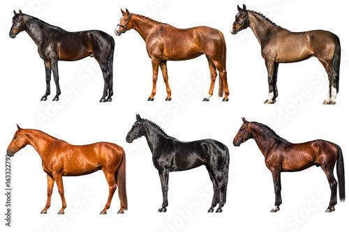 Zewnętrzna kolekcja koni na białym tle