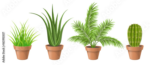Canvas Print Different plant collection in pot for home decoration, including cactus, aloe vera, palm and grass