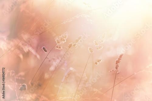 Fotografia Magic blurred sunny yellow red color fantasy meadow.