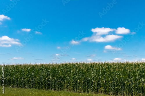 Photo Corn Fields in the Countryside