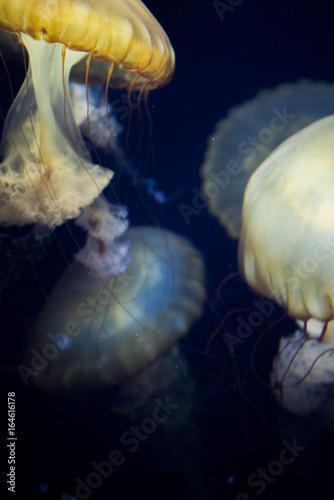 Jellyfish Dance