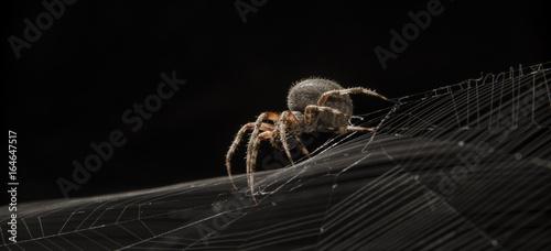 Fotografia Spider on web