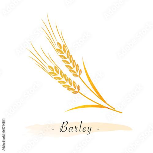 Canvas Colorful watercolor texture vector healthy vegetable barley