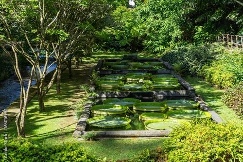 Fototapeta Idyllic Parque Terra Nostra with Nympheas, Furnas, Sao Miguel, Azores, Portugal