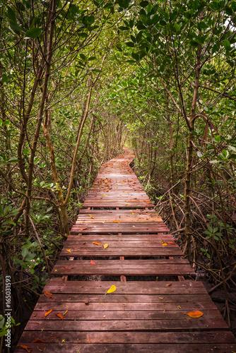Tree tunnel, Wooden Bridge In Mangrove Forest at Laem Phak Bia, Phetchaburi, Thailand