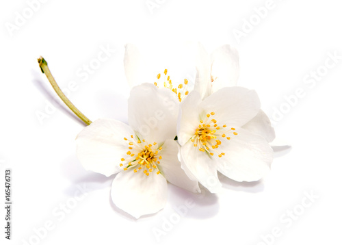 Wallpaper Mural Jasmine flower isolated on white background. close up