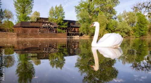 Swan on river Danube and watermill in Kolarovo, Slovakia