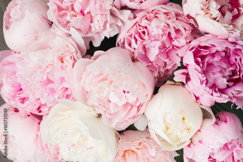 Carta da parati Pink floral background of fresh pink peony flowers buds