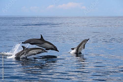 Common dolphins jumping, Costa Rica, Central America Fototapeta