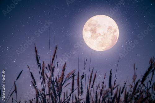 Valokuvatapetti Beautiful autumn fantasy - maple tree in fall season and full moon with milky way star in night skies background