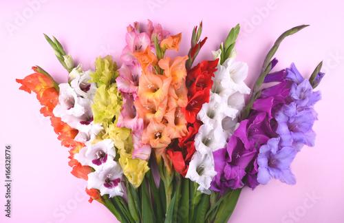 Photo Beautiful gladiolus flowers on trendy pink background.