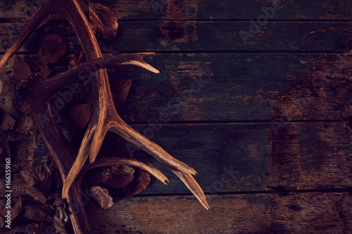 Photo Seasonal stag antlers on dark woodgrain