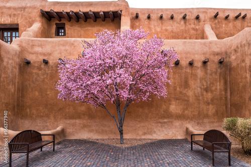 Fototapeta premium Kwitnące drzewo w centrum Santa Fe