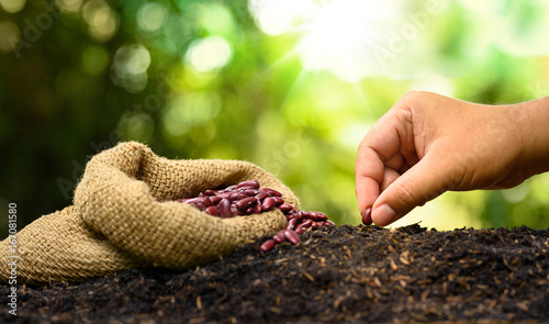 Canvas Print farmer hand planting and sowing seed to soil