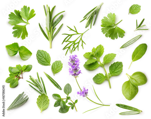 Fresh spices and herbs isolated Fototapet