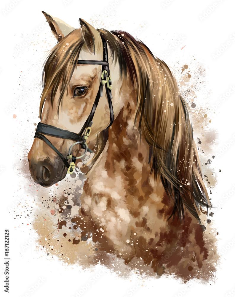 Rysunek głowy konia <span>plik: #167122123 | autor: Kajenna</span>