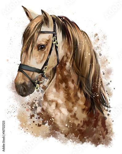 Rysunek głowy konia