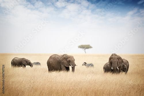 Wallpaper Mural Elephants Grazing in Kenya Africa