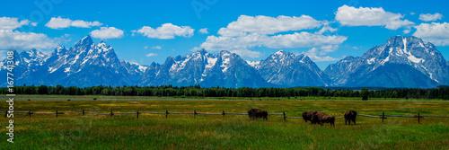 Obraz na plátně Bison, Grand Teton National Park