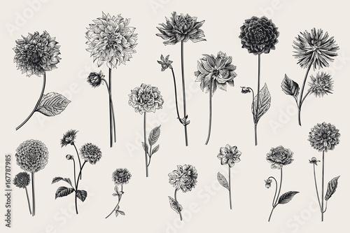 Canvas-taulu Dahlias set