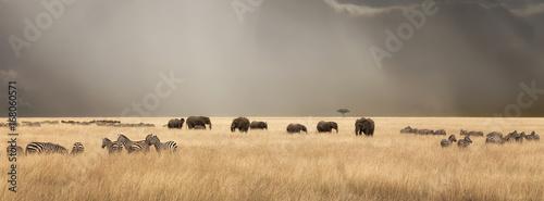 Fototapeta premium Burzliwe niebo nad Masai Mara ze słoniami i zebrami