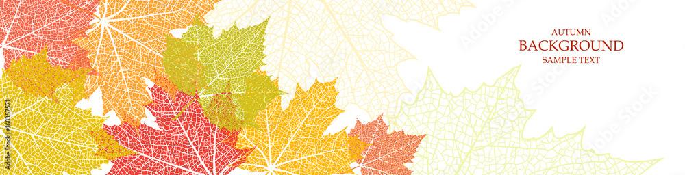 Jesieni tło i liście klon <span>plik: #168357571   autor: alena.art.design</span>