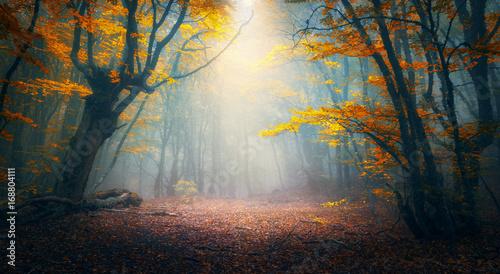 Stampa su Tela Fairy forest in fog