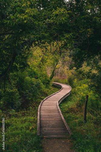 appalachian trail Fototapet