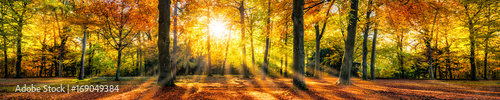 Fotografia Buntes Herbstwald Panorama im Sonnenlicht