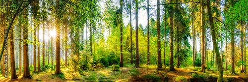 Fototapeta Panorama gęstego, zielonego lasu przy zachodzącym słońcu na wymiar