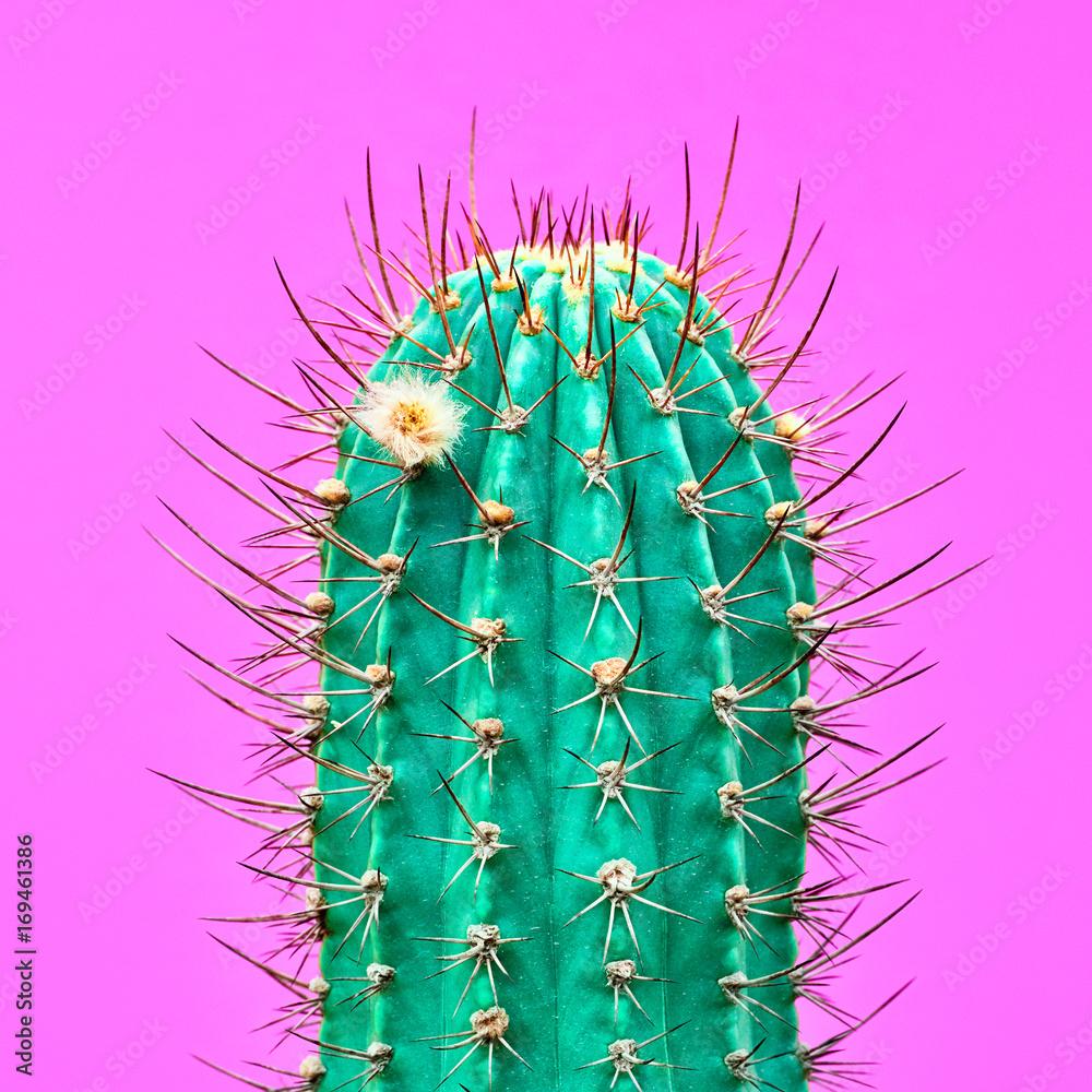 Projektowanie mody Cactus. Minimalna moda Stillife. Modne, jasne kolory. Zielony Neonowy Kaktusowy nastrój na Różowym tle <span>plik: #169461386 | autor: evgenij918</span>
