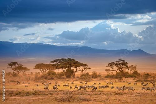 African Savannah. The foot of Mount Kilimanjaro. African animals.