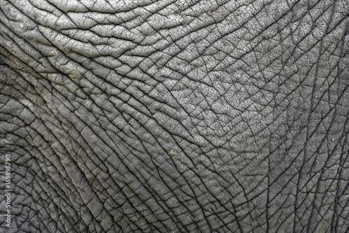 Fototapeta premium Tekstura skóry starego słonia
