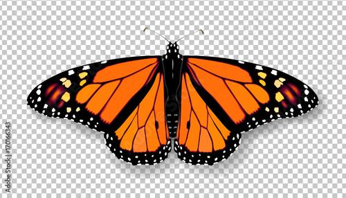 Fotografia Realistic 3d Monarch butterfly