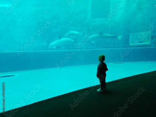 a child looks at the dolphins at the aquarium