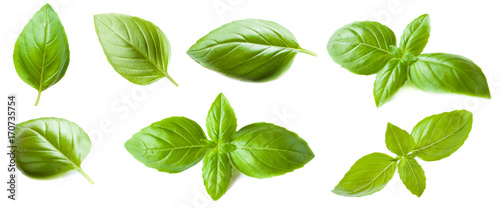 Cuadros en Lienzo Set of Basil leaf isolated on white background. Macro. Top view.