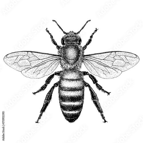 Slika na platnu Honey Bee