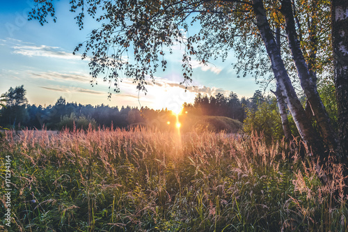 Sunset Or Sunrise In Forest Landscape. Sun Sunshine With Natural Sunlight And Sun Rays Through Woods Trees In Summer Forest