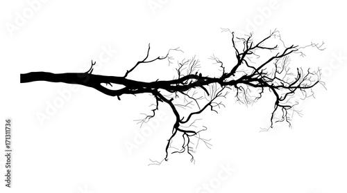 Vászonkép Dry Tree Branch Vector Shape Design