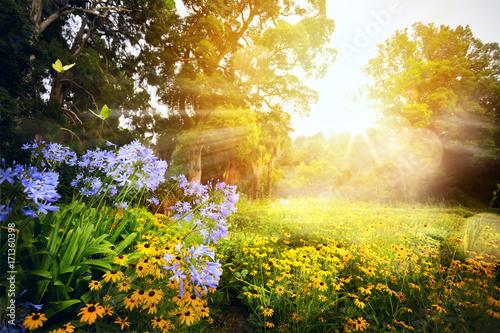 Fototapeta premium sztuka piękny krajobraz; zachód słońca w parku