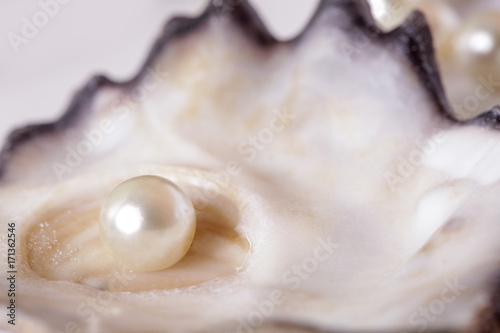 Single pearl in an oyster shell